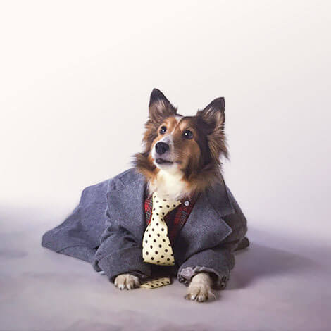 Dog wearing a suit